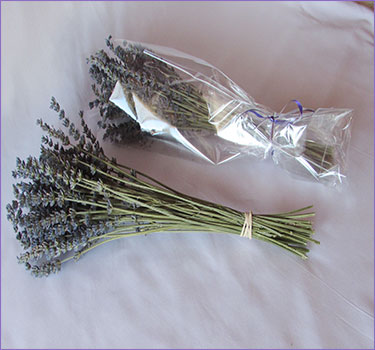dried french lavender bundles long christel lake lavender lavender farm in ontario open to the public - French Lavender